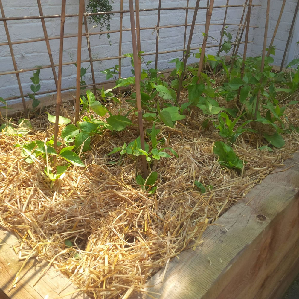 Edge vegetable raised bed with straw mulch for low maintenance growing