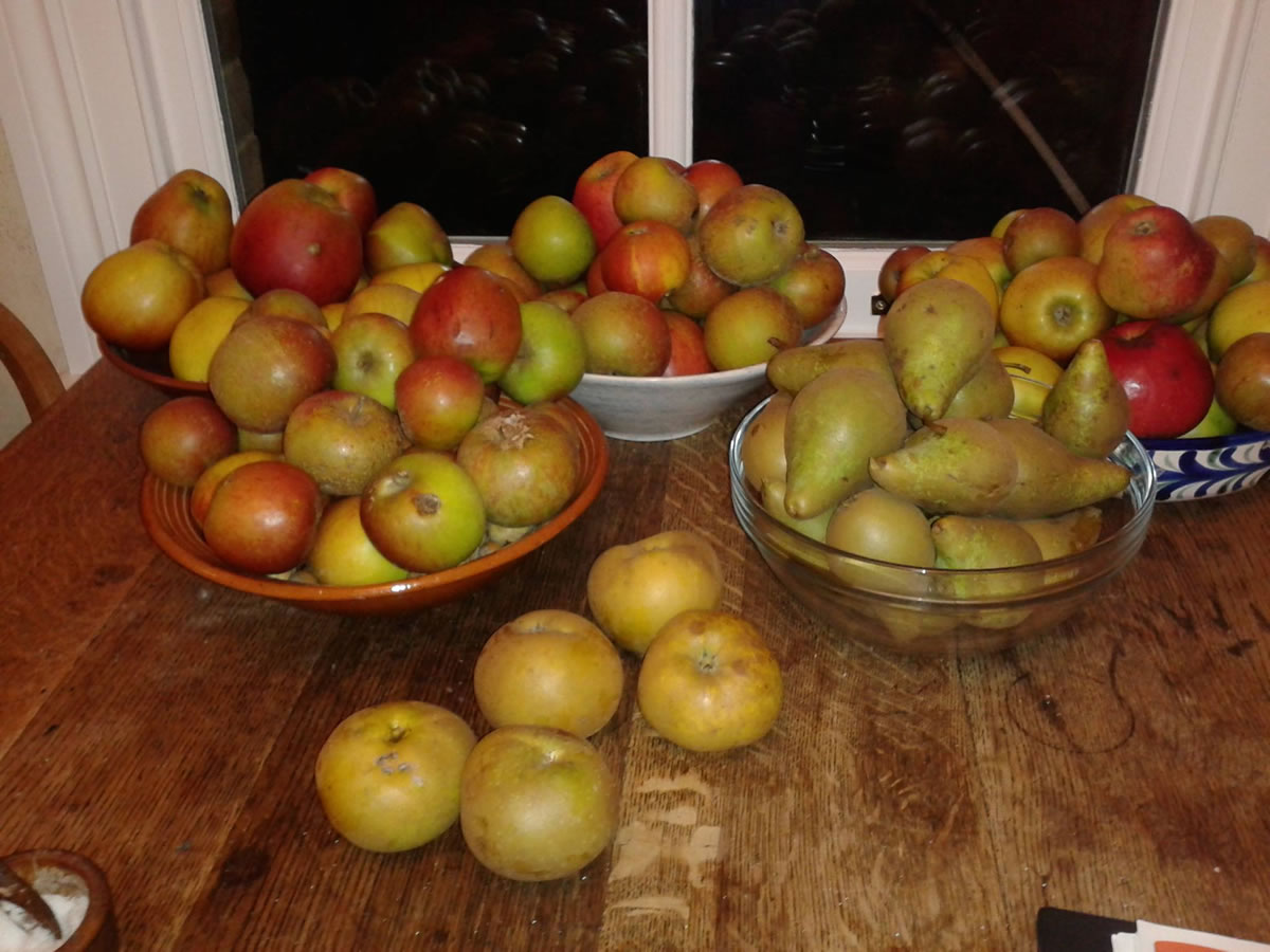 Local Apples - all windfalls otherwise going to waste. edge can help you preserve your crops and prevent food waste